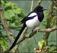 Quel oiseau est charognard ?