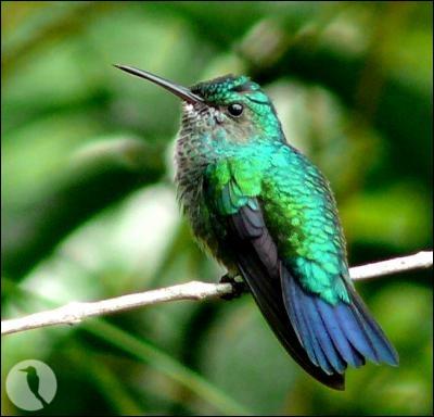 Quel oiseau est le plus coloré ?
