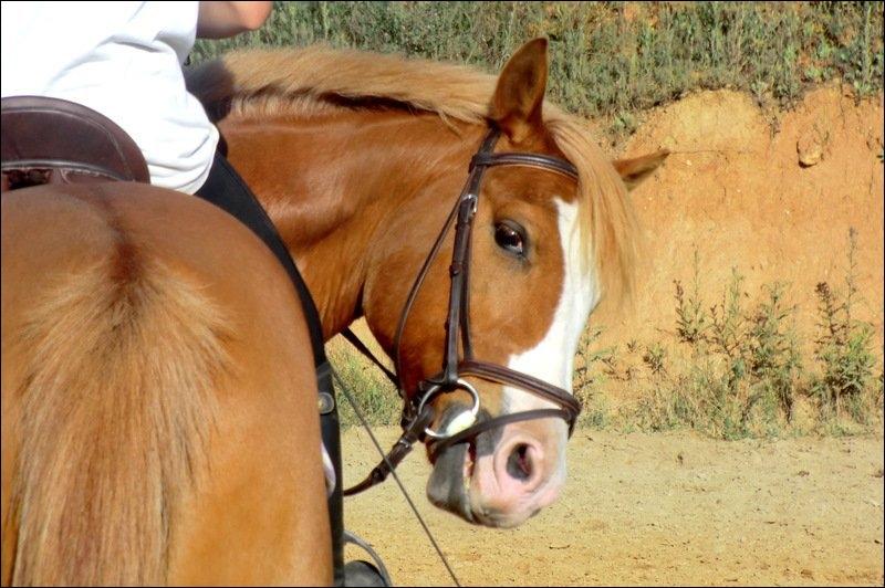 Lorsque le cheval tourne, le mouvement de l'encolure s'appelle :