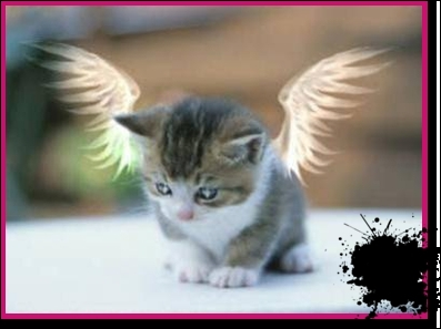 Dans quelle pièce de Molière peut-on entendre Agnès dire :  Le petit chat est mort  ?