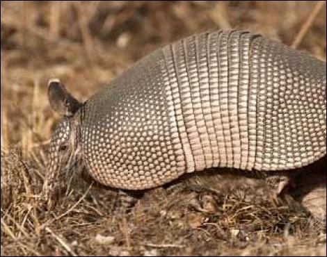 Dans quel pays pouvez-vous voir cet animal ?