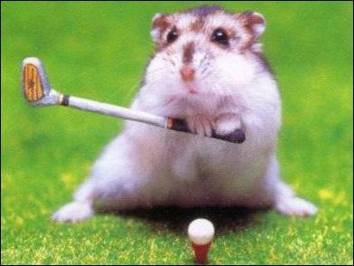 Habituellement, on le voit tourner dans une roue, là il préfère le golf, vous le connaissez bien, c'est le ...
