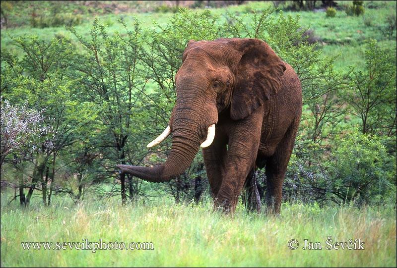 Sur quels continents pouvez-vous voir un éléphant sauvage ?
