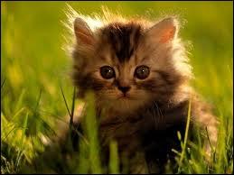 Quel est le mot anglais pour  chaton  ?