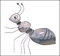 Comment traduit-on  une fourmi  ?
