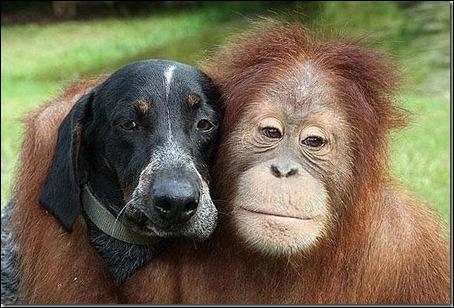 Dans le film  Doux, dur et dingue , quel acteur accompagne l'orang-outan ?