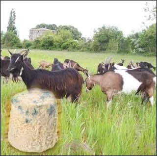 Petit fromage à base de lait de chèvre, à pâte blanche et molle à croûte naturelle, d'un poids moyen de 150 grammes de la région naturelle du Poitou ... .