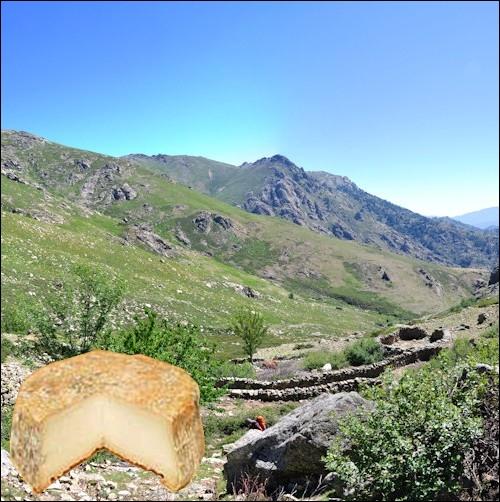 Ce fromage élaboré dans une haute vallée corse, à base de lait de brebis ou de lait de chèvre, à pâte molle à croûte lavée, a un poids moyen de 400 grammes... .