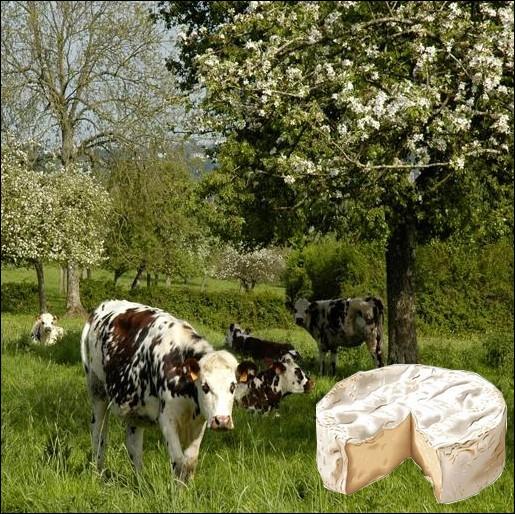 Fromage de lait cru de vache, à pâte molle légèrement salée et à croûte fleurie originaire du petit village normand où il aurait été fabriqué pour la première fois ... .