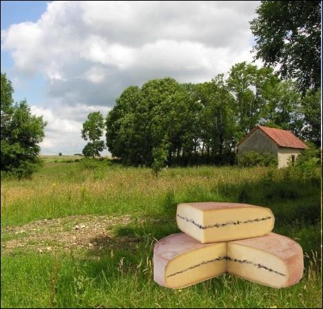 Appellation fromagère désignant un fromage au lait cru de vache, à pâte pressée non cuite à la raie cendrée, d'un poids moyen de 7 kg, fabriqué en Franche-Comté... .