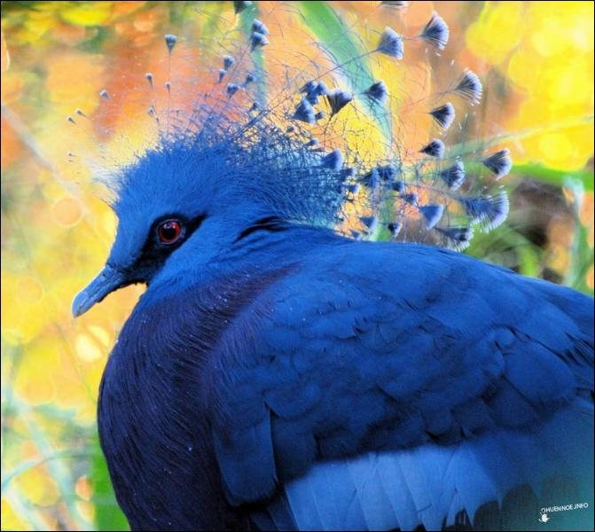 Quel est cet oiseau d'un bleu magnifique qui habite l'île de la Nouvelle-Guinée ?