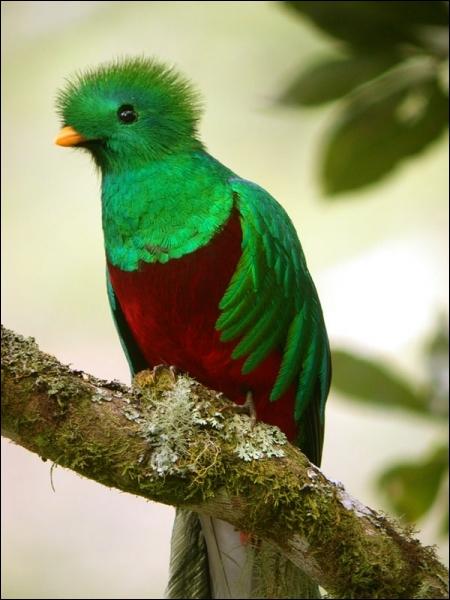 Le nom de cet oiseau coloré est présent dans celui d'une divinité aztèque, quel est son nom ?
