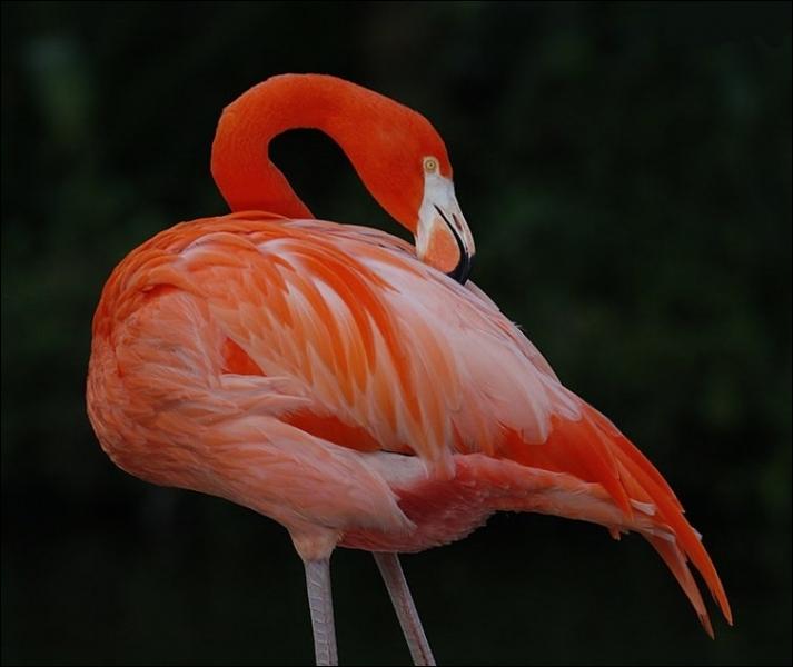 Tout le monde connaît le flamant rose mais on connaît beaucoup moins le flamant rouge. Où habite-t-il ?