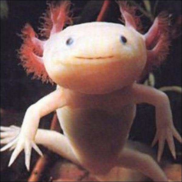 Comment se nomme cet étrange animal ?