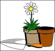 Le contenant de cette fleur est l'homonyme d'une ville de la région ...