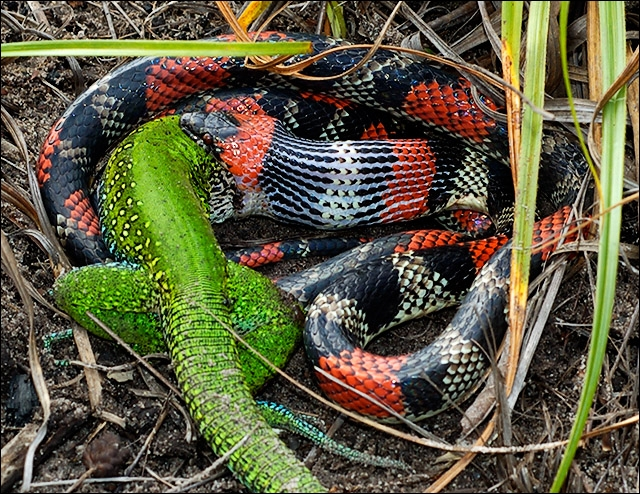 Peu de lettres, mais extrêmement venimeux, ce serpent !