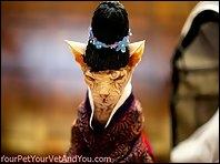Avez-vous vu le nouveau chapeau de Zozo ?