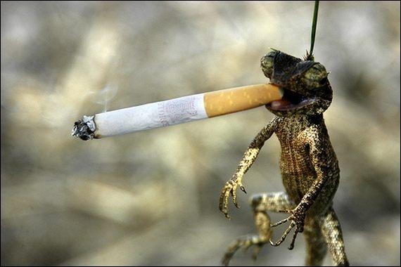 Dieu est un fumeur de gitanes, lui répondit Catherine Deneuve !