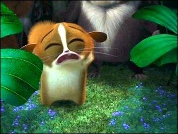 Pourquoi ce petit lémurien pleure-t-il ?