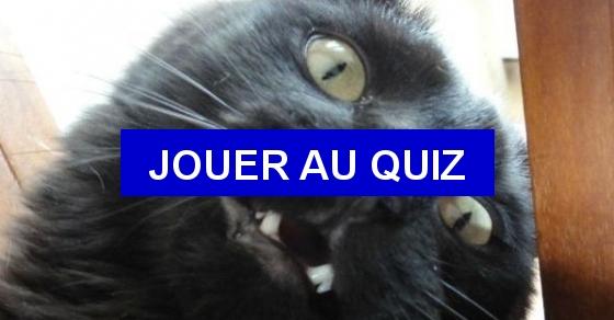 Quizz chat quiz chats - A quel age couper les griffes d un chat ...
