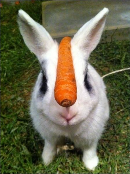 Au rendez-vous des bons copains, y'avait pas souvent de lapins !