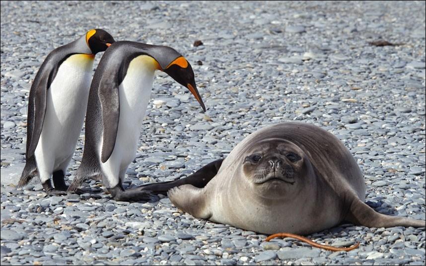 Le manchot est aussi appelé pingouin !