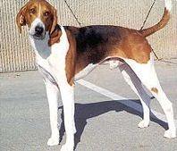 Connaissez-vous les races de chiens ?