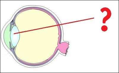 Quelle est la partie de l'œil désignée par le point d'interrogation ?
