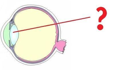 Bac de sciences 1ère L/ES : l'oeil et la vision (SVT)