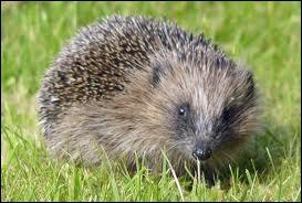 Ce charmant petit animal est l'homonyme parfait d'une commune de la région ...