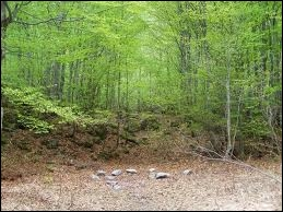 Que va-t-il arriver à la forêt dans  Minuit  ?