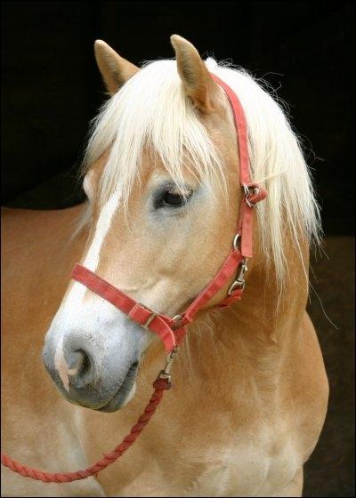Quelle est la race de ce poney ?
