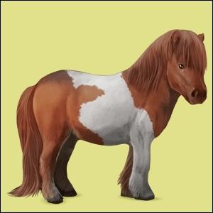 Quel est le nom de la race de ce cheval ?