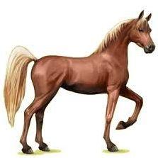 Les races de chevaux d'EQUIDEOW