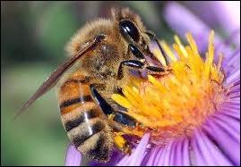Animaux : quelle est la forme des alvéoles d'un nid d'abeilles ?