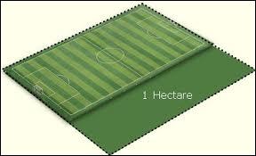Science : combien y a-t-il de mètres carrés dans un hectare ?