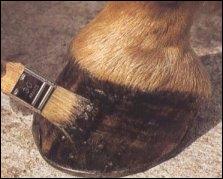 Vous graissez les pieds à partir :