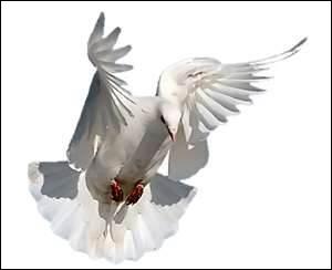 - plumes de (... ) et pattes de (... ),