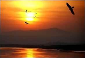 A l'aurore quand l'oiseau d'or (... )