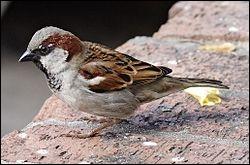 Quel est ce petit oiseau ?