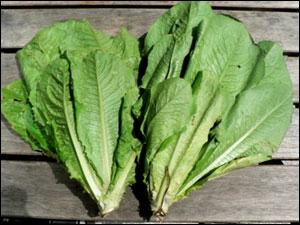 Quel est le nom de cette salade ?