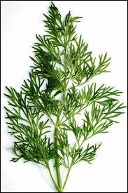 Quelle est cette plante aromatique qui doit être mangée crue pour conserver son arôme, et qui accompagne les poissons ?