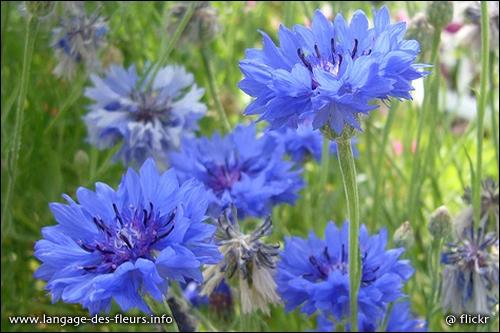 Quelles sont ces fleurs qui poussent en été ?