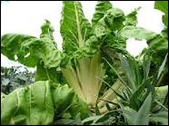 Quel est ce légume qui pousse en été ?