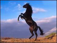Qui a écrit  L'homme qui murmurait à l'oreille des chevaux  ?