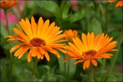 Il vous sera possible d'écrire le nom de cette jolie fleur, qui évoque un sentiment d'inquiétude, en prélevant des lettres dans celui de la capitale...