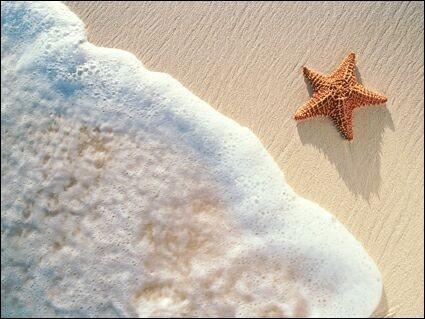 L'étoile de mer :