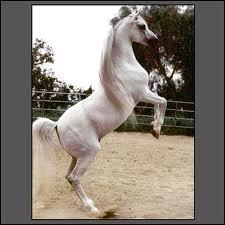 Ce cheval est . .