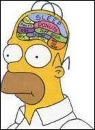Quelles sont les 3 pensées qui occupent en quasi permanence le cerveau d'Homer ?