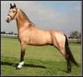 De quelle couleur est la robe de ce cheval ?
